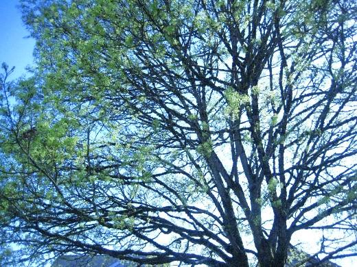 Big Tree at the Park